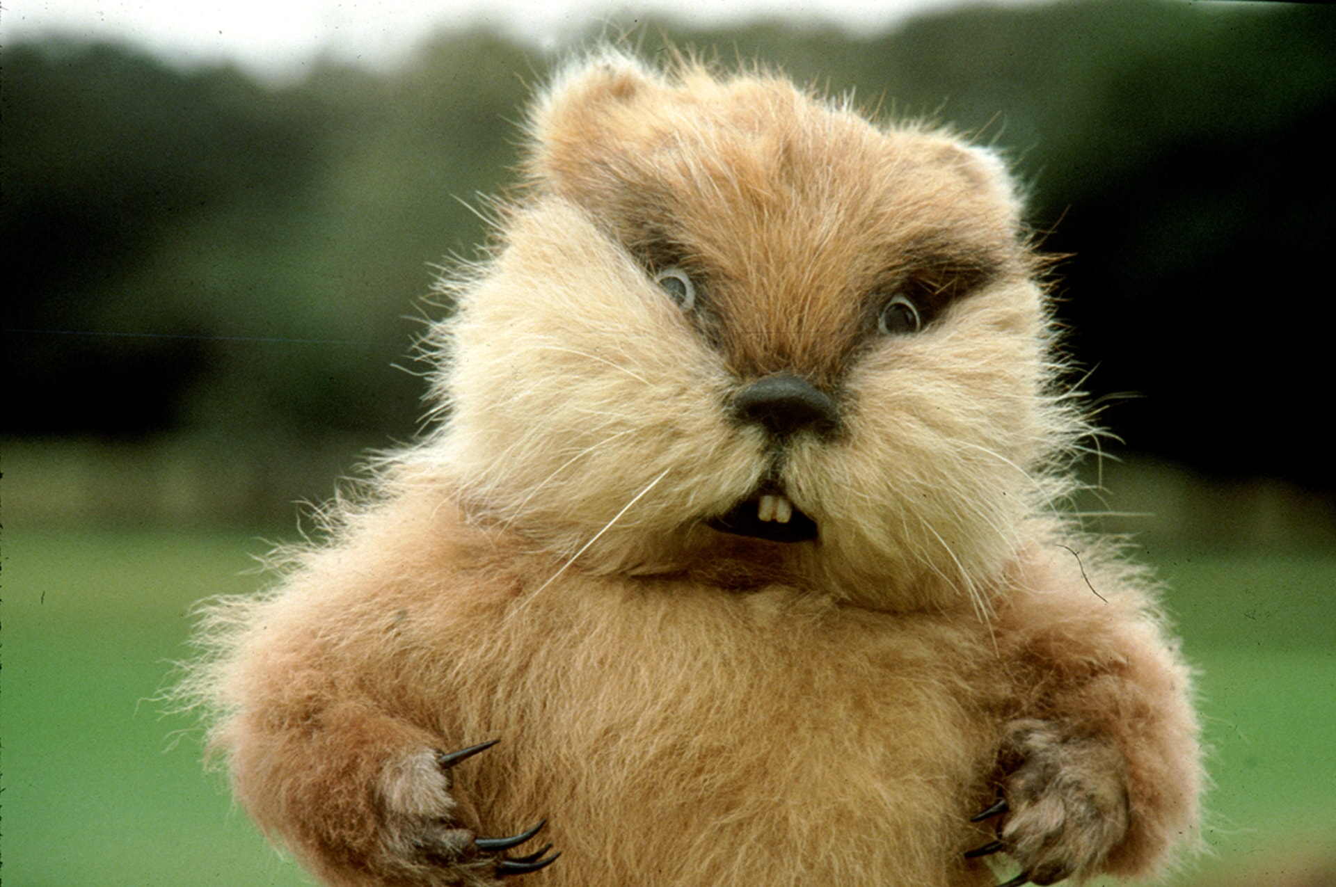 the devious gopher poses for the camera in caddyshack