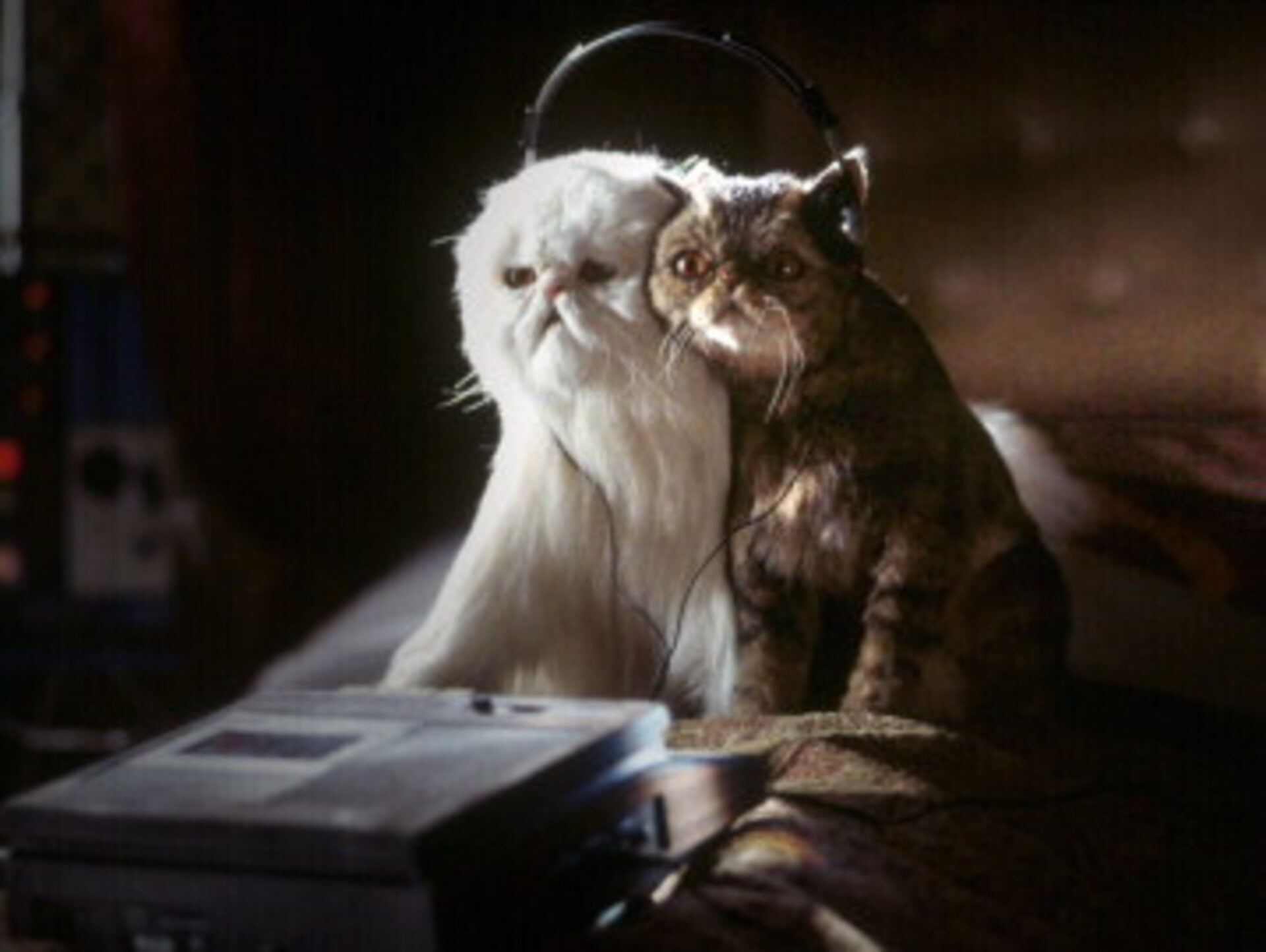Cats & Dogs - Image 12