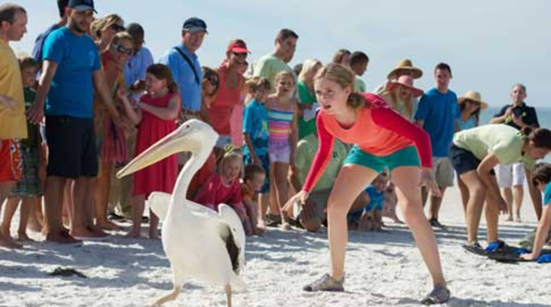 Dolphin Tale 2 - Image 13