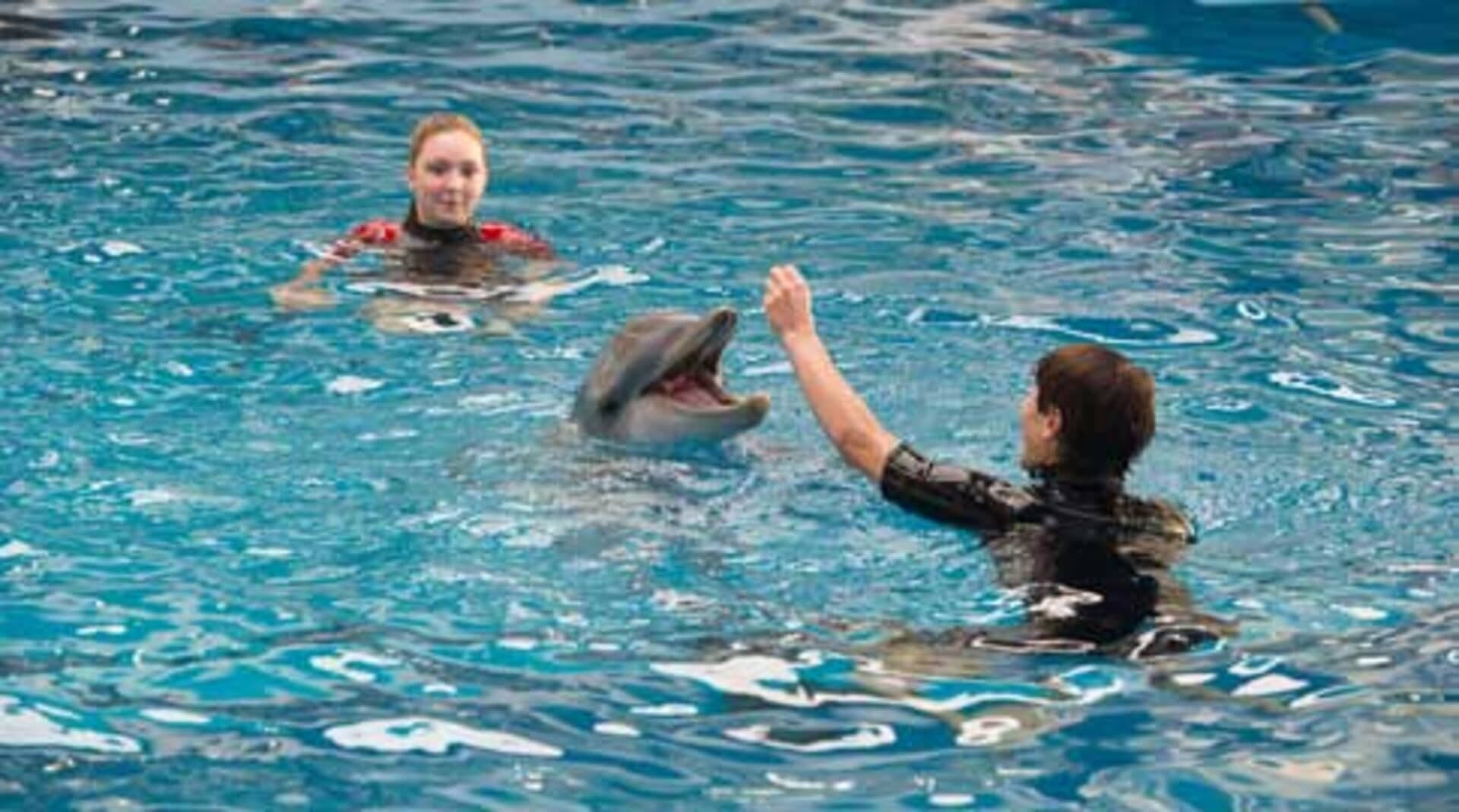 Dolphin Tale 2 - Image 26