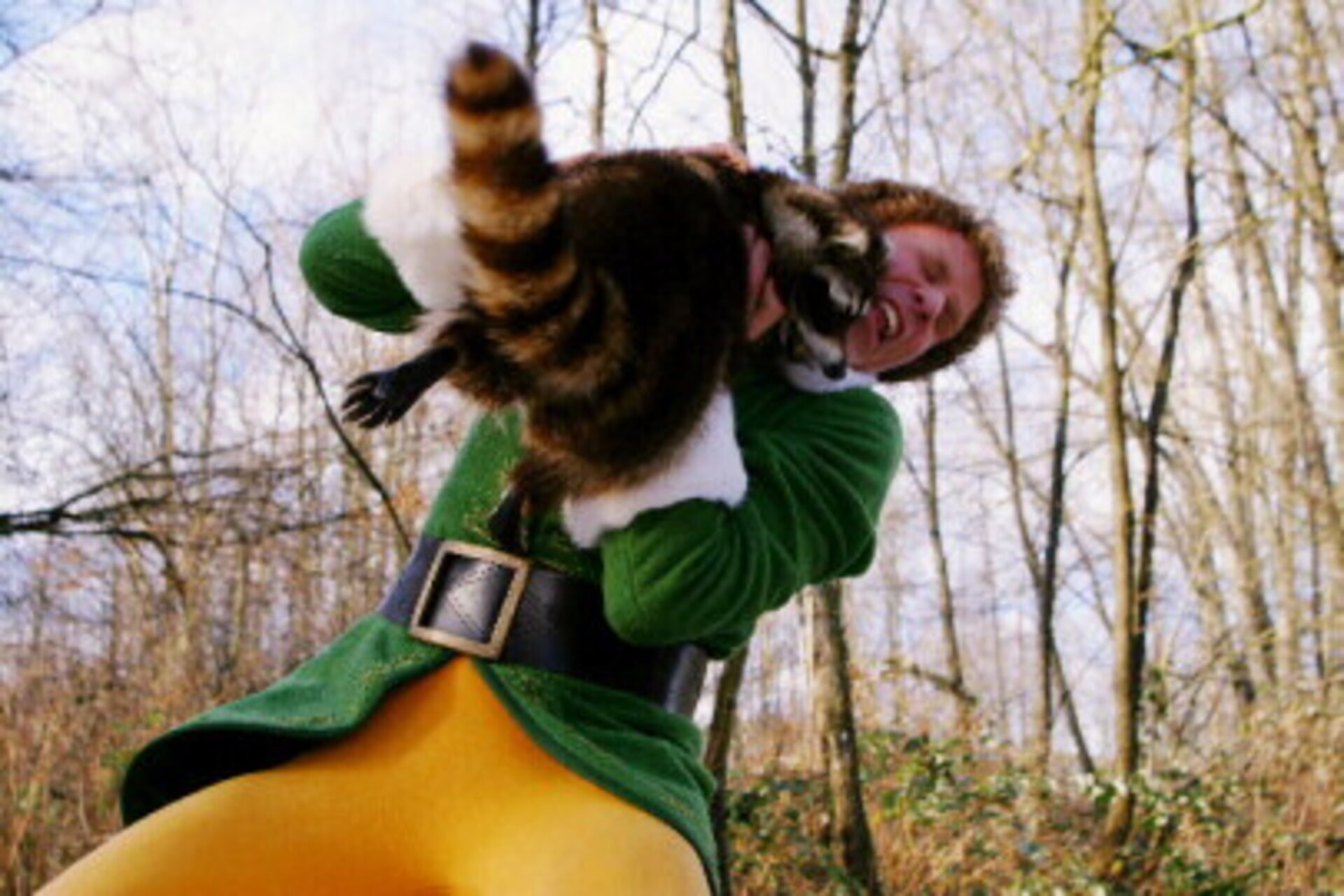 Elf - Image 11