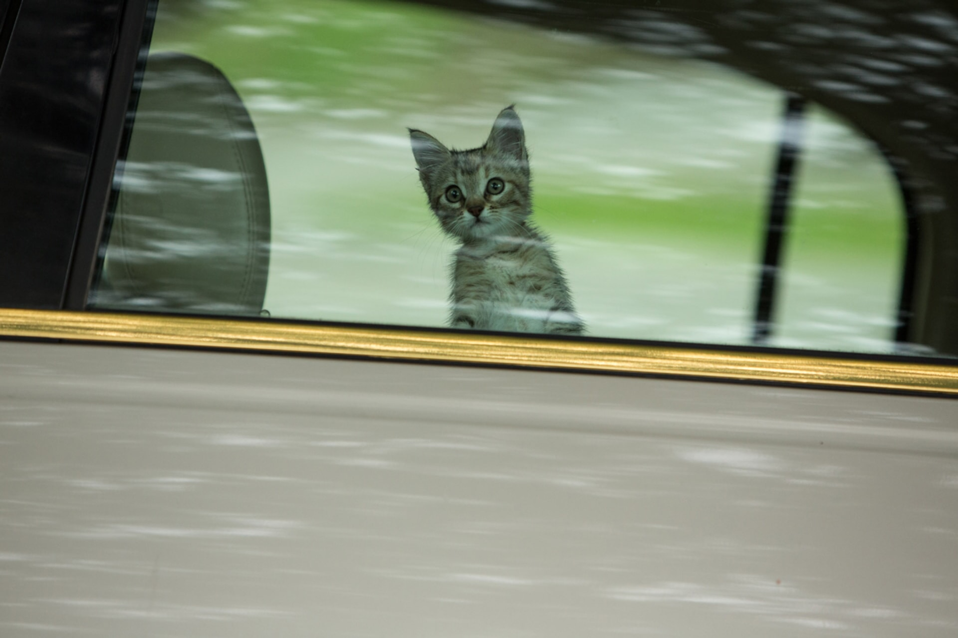 Keanu the kitten looking out a window from a moving vehicle