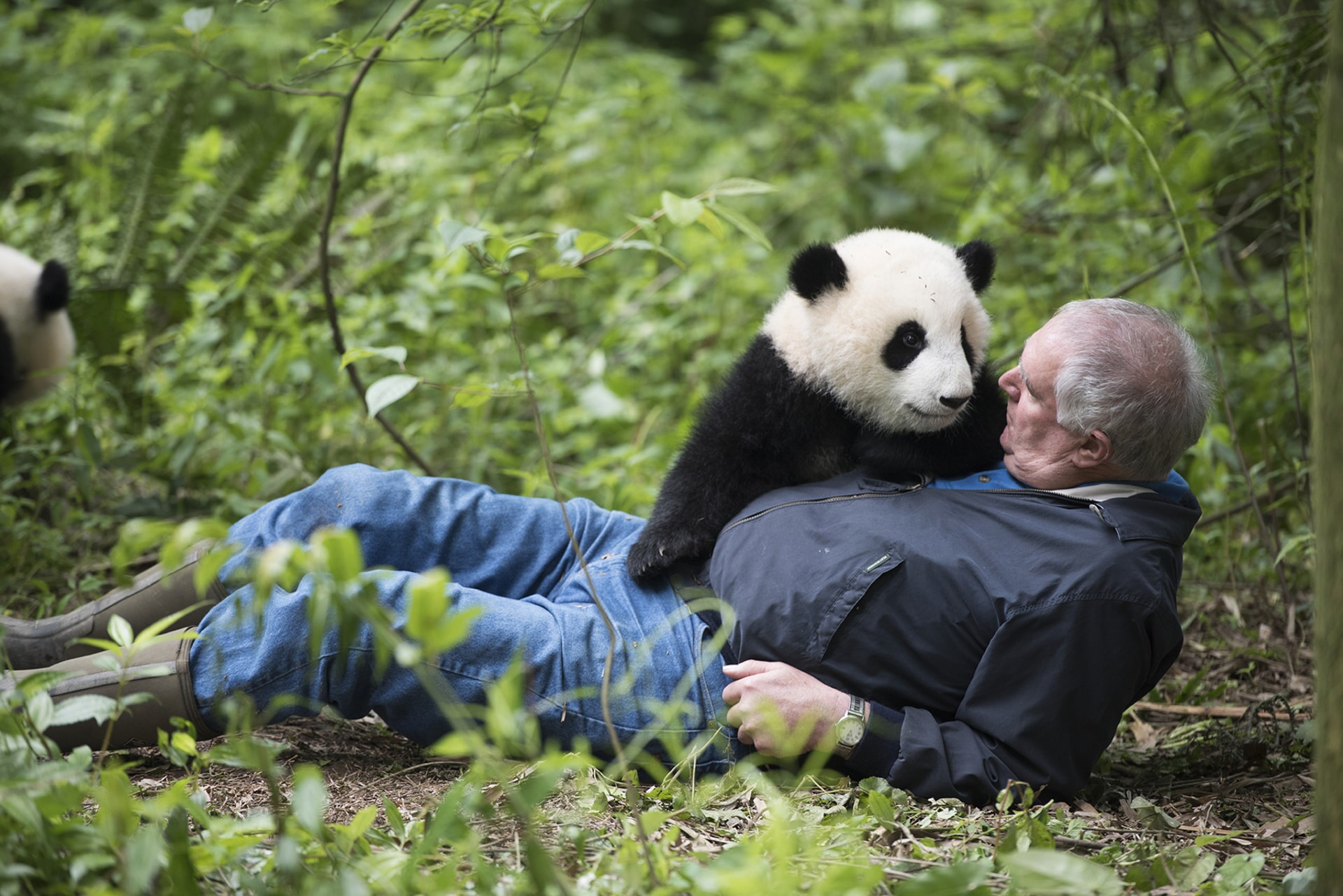 BEN KILHAM, Ph.D. (Independent Wildlife Biologist/Black Bear Behavior) with a Giant Panda at Panda Valley in Dujiangyan, China as seen in the new IMAX® film, PANDAS