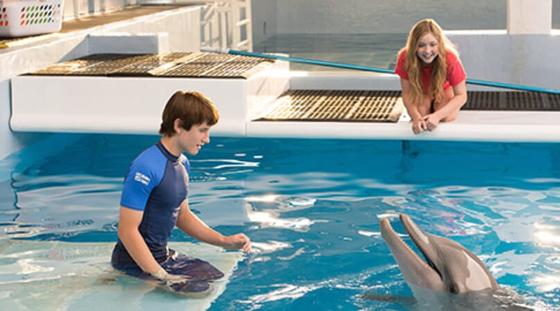 Dolphin Tale 2 - Image 2