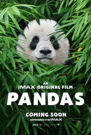 Panda face framed by bamboo leaves and movie logo at the bottom of poster