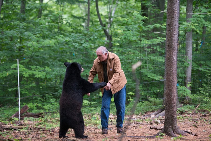 BEN KILHAM, Ph.D. (Independent Wildlife Biologist/Black Bear Behavior) with an orphaned Black Bear cub at the Kilham Bear Center in Lyme, NH as seen in the new IMAX® film, PANDAS