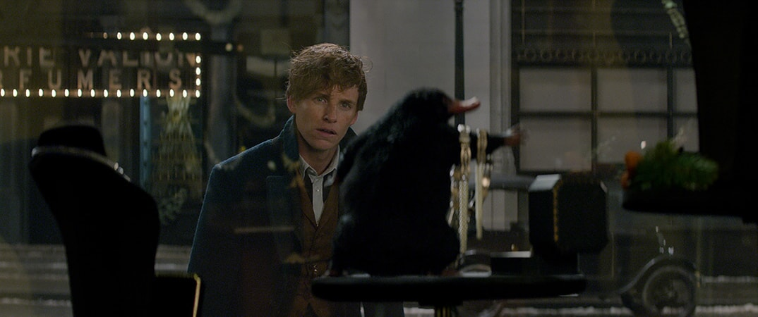 """EDDIE REDMAYNE as Newt Scamander and a beast called a Niffler in Warner Bros. Pictures' fantasy adventure """"FANTASTIC BEASTS AND WHERE TO FIND THEM,"""" a Warner Bros. Pictures release."""