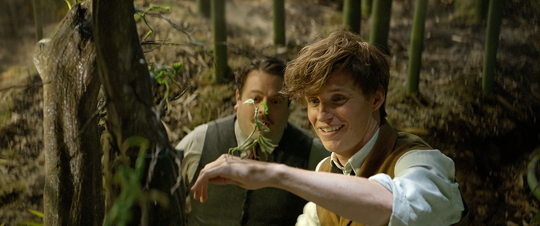 """DAN FOGLER as Jacob, EDDIE REDMAYNE as Newt and a beast called a Bowtruckle in Warner Bros. Pictures' fantasy adventure """"FANTASTIC BEASTS AND WHERE TO FIND THEM,"""" a Warner Bros. Pictures release."""