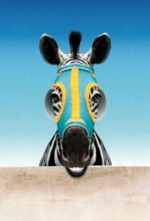 Racing Stripes - Image 64